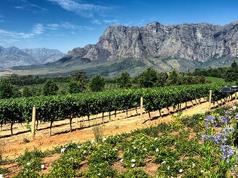 cape winelands 480x360